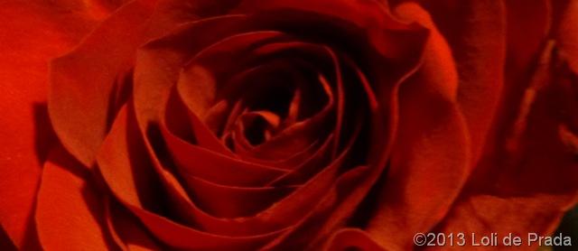 rosa685.jpg