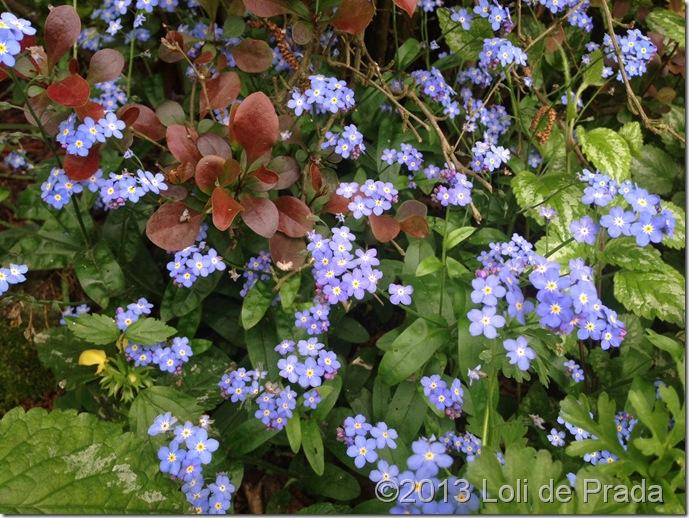 Holanda_2013_jardin_Truus